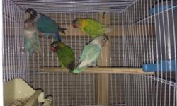 Different colors off lovebirds you must see them 30-50 each depends on the colors call Nicolas at 619-997-5293 thanks habla español también This ad was posted with the eBay Classifieds mobile app.