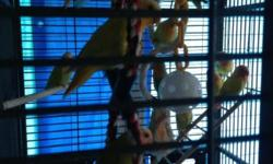 Have some young lovebirds.male and female.not tame