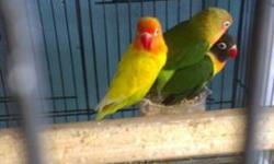 We have different color lovebirds male and female..Price $35-$50 .. if interested call 619-942-1674 or visit: Arrieros Pet Shop 2550 Imperial Ave San Diego Ca 92102
