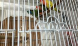Baby Assorted Loved Birds For Sale. Contact Mike at 212-719-1002 during Business Hours Monday thru Friday 11-5Pm