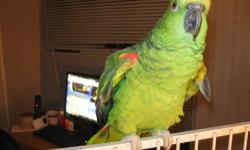 have a hand tamed yellow crowned amazon for sale comes with large cage. Can talk and whistle. Loves company. Not sure if it is a male or female. Would like it to go to a good home. Moving can not keep. Had it since it was 9 weeks old. serious inquiries