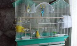 I have two Lutino lovebirds for sale. Asking price $ 25 each including a cage. If interested please leave a message. Thanks