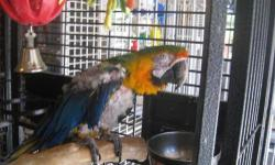 Macaw - Quinn - Large - Adult - Bird Meet Quinn! Quinn has been with us about a month and we are still figuring out her/his likes and dislikes. Quinn is a beautiful bird that needs a home with Macaw experience. If you think you have everything that Quinn
