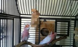 I have a gorgeous pair of major mitchell cockatoo for sale. Birds are in perfect condition, all feathers, and no deformities. They are banded. They are 13 years old according to previous owner. They started to go in the nest box, they are always preeming