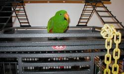 GREAT DEAL ON BEAUTIFUL BIRD, TALKS AT LEAST 60 WORDS, DOES NOT BITE, REALLY FRIENDY, VERY HEALTHY, RECORDS OF HEALTH WITH HIM. TOYS, FOOD BOWLS, CAGE COVER, ETC, ALL INCLUDED WITH LARGE CAGE. CALL (863) 605-7442