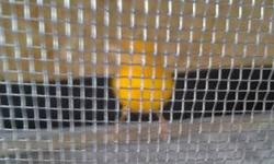 I have a male red factor for sale $85 sing very good Yellow,male waterslager ask $85 Sing very good also have,3 breeders cage ask $35 each If you are interesting you can email Thank you