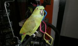 HI, THIS BIRD TALKS VERY WELL AND HE WILL BITE UNTIL HE GETS TO KNOW YOU. HE LIKES GIRLS.NOT MEN, WE HAVE DNA.PAPERS ON HIM,HE LIKES BATHS,$500 WITH VERY LARGE HEAVY DUDY CAGE , MUST SELL DO TO MY HEALTH. PLEASE CALL 810-990-8266 {no-text} no e-mail}