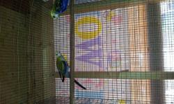 cockatiels,rosellas,parrotlets,lovebirds,green cheek conures,kakarikis and more,,,call me @619-316-1007 for more question,,,serious buyers only!!!!!NO TIME TO CHECK EMAIL ,,,CALL OR TEXT MESSAGE ONLY