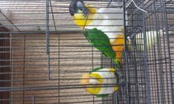 Due to unavoidable circumstances, I have to let go most of my birds.breeders, proven and bonded. I have a lot of green cheecks. Tatooed male and female.last year's babies.pineapple and yellow sided. Some cinnamons too. Prices starts $150 each