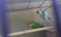 I have 4 lovebird pairs, they all had given me babies. I also have an extra male for $40, his mate died. Pls serious buyers only This ad was posted with the eBay Classifieds mobile app.