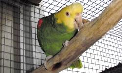 Six beautiful breeding age double yellowhead parrots for sale. Paste this link in browser to see more photos: http://www.flickr.com/photos/92151224@N04/ Also have redhead parrot and military macaw for sale! Call for prices!