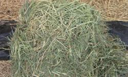 EXCELLENT GRASS HORSE FEED $19.50 100# bales Grass hay from Oregon 70 % Orchard grass 30 % Meadow grass. Good horse hay. ONLY100 bales available pick up yourself, or delivery extra$ $19.50 bale cash or credit cards only call for address in RAMONA to see