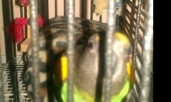 Young Female Parrot Hatching date 1/27/12 We are moving to Texas and sadly have to down size our animals, comes with cage and food