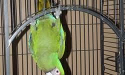 Ernie is a great military macaw. He loves to play, hang up side down off of stuff. He talks with clean vocab. Please call me 607-372-9912