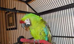 Female Military Macaw 6 yrs old tame for more info email reasonable offers considerd