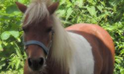 Mini horse for sale.Red and white mare 33.75 inches tall. Great driving gal and since i have had her I have led children on her. . she leads loads ties, stands for farrier and a bath. Must see! Adults and kids could show her and she is traffic safe.