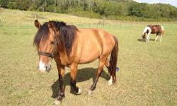 Brown female miniature horse with papers. 200 Small Saddel and blanket 100 936-645-2250 call or text for pics This ad was posted with the eBay Classifieds mobile app.
