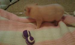 Hi my name is Lucy Im a mini micro pigs I was born 12-13-2012 Im litter box trained I love kids Im a great pet I will get no more thin 20-25 pounds Im looking for a new home asking 400 obo 937-270-6889