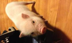 I am owner just received pig but now in financial distress due to well we will just be nice and say military now that my husband is recently medically retired. I am very upset that I have to do this but I cannot stand its the pig or my kids so I am