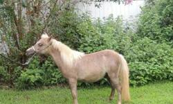 Miniature horse 3 year old will make a great pet He has stifle problem in his back legs He can run and play just occassionaly he will have a stifle problem after standing still .. Pick up at my home