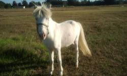 Two miniature mare yearlings for sale, palomino, will be small. 910-640-4763. No emails please.
