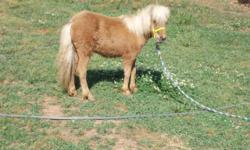 Beautiful little miniature horses, Fillies / Colts 1 year old to 3 years old beautiful colors to pick from. We have more colors to choose from don't have all the pictures ready yet. $250 up. Please call for more information. 706-207-9366 / 678-234-1666 No