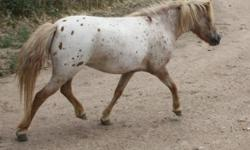www.windsweptappaloosas.com we have 3 8 month old foals for $300 without papers (bay girl, paint boy), and a few mares with appaloosa breeding for sale from $500 and up on our website!! Prices negotiable or get better if you take more than one!