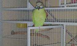 Proven Pair Mustache Parakeet! Visit us or call for more information 9531 Jamacha Blvd. Spring Valley, Ca 91977 or call 619-434-3207