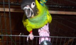 I have a Nanday Conure parrot for sale don't know if this bird is a male or female I have to sale due to working and not having allot of time to spend with him if you are interested please email me he does not come with a cage so you will have to have one