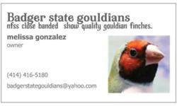 We offer quality gouldian finches all birds are close banded and come with pedigrees. We have begun our 2015 breeding season and are starting a waiting list. All our birds are sold on a waiting list format . The waiting list is a no oblagation waiting