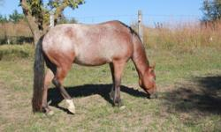 I have a nice POA gelding for sale. He is 7yrs old and has had 60 training working cattle and trail riding. He has been ridden by my 11yr old and would make a great show pony for someone looking to show. My daughter moved on to a bigger horse therefore he