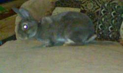 IF THE AD IS UP I STILL HAVE HER 8 week opal otter female mini rex very sweet likes being held comes with food hay treats and carrier to take her home in. Pictures of parents are attached $25, if interested text anytime. 513-435-4042