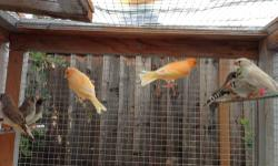 I have a young pair of orange canaries for rehoming. $40/each or $70/pair This ad was posted with the eBay Classifieds mobile app.