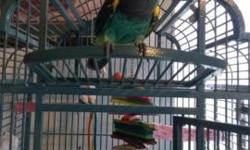 My name is Oscar and I'm a 13 yr old male Meyers parrot and because of my owners allergies I am looking to rehome. Oscar can say his name: Oscar, Hi Oscar, makes bird sounds in the morning, and sounds like a whistle. My husband, son and I can hold him but