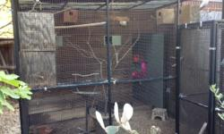 """I have a 10 foot square (10'x10') walk-in aviary with opaque plastic roof. It's in great condition. It's made of 1"""" square black powder coated steel tubing - very sturdy - with black plastic coated wire mesh 1"""" x 1/2"""" square. The roof slopes down to allow"""