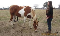 Paint Horse for sale. Very gentle and ridable. The family that had it before, rode her often then the children got older and didn't ride her for a year. But she's really sweet. Please call 870-784-1602