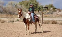 "TONKA"" is a 9 yr old Gelding about 15.2 hands he is a great all around guy. very easy to handle, catch, load, ect. he has been used for ranching, team sorting, branding, and lots of mountains and trails. this is a horse that just about anyone can ride. he"