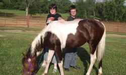 This is Rising Star, he is a 1 year old gelding half quarter horse half paint, easy to catch and halter broke, he will load onto a trailer with food (he is very food motivated), he has had plenty of ground and round pen work and is very sweet, loving and