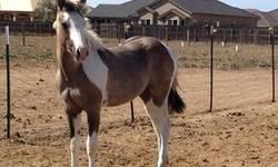 I have APHA horses for sale, one filly, one colt, and one stud. I also have Gypsy horses and a Fell pony. Please visit my website. http://mysticdreamgypsies.webs.com/