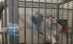 I have a Pair of Proven breeder African gray parrots. I believe they are both in their teens. They are banded, proven for previous owner. I believe it is just too noisy here for them. If you have a quiet place for them this is a good investment, Neither
