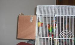 For sale 2 Fisher Lovebirds As in my other ads we can not have these birds due to allergies