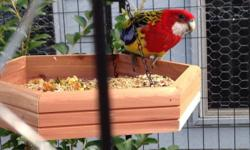 Proven, bonded pair of golden mantle rosellas. They are approximately four years old. Selling for $300 for the pair. They are housed in an outdoor aviary. Would consider trading Sorry, no shipping. Thanks, Bryan Columbus, Ohio