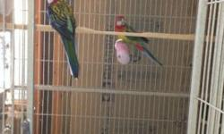 In need of a new home is a pair of Golden Mantled Rosella Parrots. These are rare and very beautiful birds. They are not tamed. Appx. 4-5 years old. They make beautiful cage birds. Will separate. Available for only $250 each. Or the pair and cage and nest