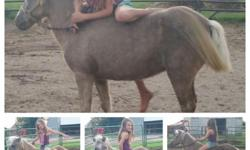 We have up for grabs a pair of very well broke kids ponies for sale. First one is the little mare she's 12 second is the gelding hes 14. Both are very very quiet and can be rode all over bareback with a halter and lead rope. Kids have out grown them so