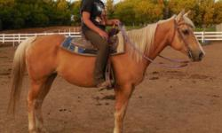 Beautiful palamino gelding 8 years old. He would be a good trail horse, he does not mind following along. Have done some pattern work with him, and intermidiate rider would do well with him. Please call 847-452-2201 for info. $1500.00 or best offer.