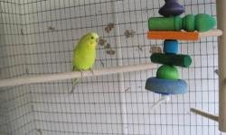 I am looking for 2 hand fed frequently handled playful and friendly budgies , 1 male 1 either or. Located near mountain view California, willing to drive a reasonable distance. Please call or text 610 655 5588.
