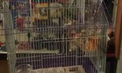 I have one sweet little hand fed & tame parakeet baby left. Pretty yellow, black and green in color.....super sweet we sale cages, food, toys, & supplies