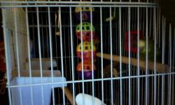 I am trying to make room for a new male budgie so I am putting her up for sale/trade. She does not come with a cage or anything so bring something to put her in, also wings are not clipped so be careful. She is Green with dark markings. She isn't