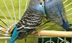 Parakeet (Other) - Mabel - Small - Adult - Female - Bird CHARACTERISTICS: Breed: Parakeet (Other) Size: Small Petfinder ID: 25003869 CONTACT: Dakin Pioneer Valley Humane Society, Leverett location | Leverett, MA | 413-548-9898 For additional information,