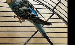 Parakeet (Other) - Uncle Leo - Small - Young - Male - Bird CHARACTERISTICS: Breed: Parakeet (Other) Size: Small Petfinder ID: 25093746 CONTACT: Wisconsin Humane Society | Milwaukee, WI | 414-ANI-MALS For additional information, reply to this ad or see: